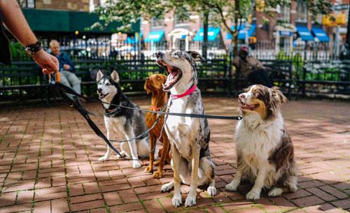 Mange-t-on du chien en Chine ?